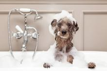 Tips to Help Pet Owners Avoid Plumbing Repair Issues